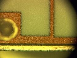 316Optical-Microscopy1